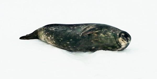 14_Seal