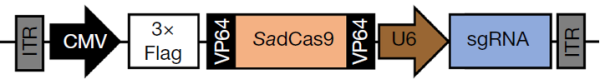 This image has an empty alt attribute; its file name is cas9-insert-map.png
